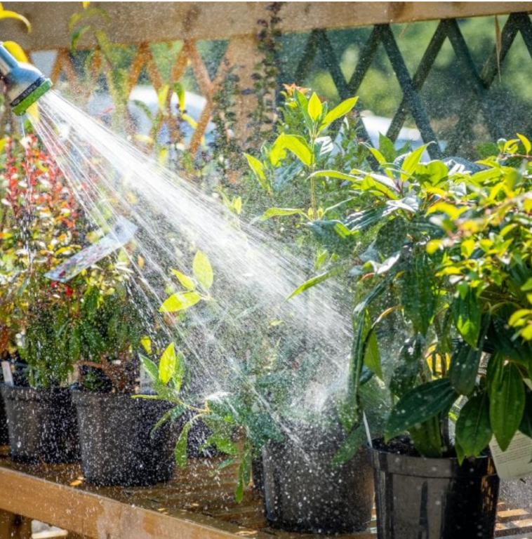watering (1) (Medium)